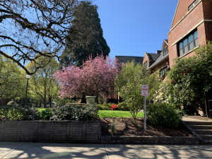 Sunny day with a photo of several kinds of trees and one with pink blossoms
