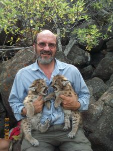Man holding two cougars